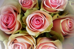 A Bouquet of Pale Pink Roses
