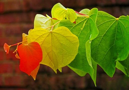 Fall Leaf Seriation