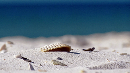 Shell Pieces