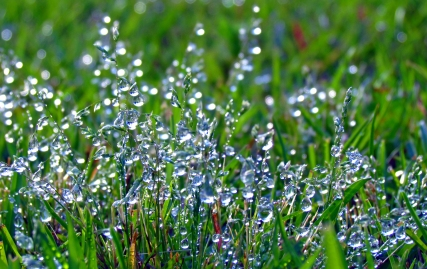 Dew Drops in the Grass