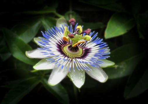 An Intricate Flower