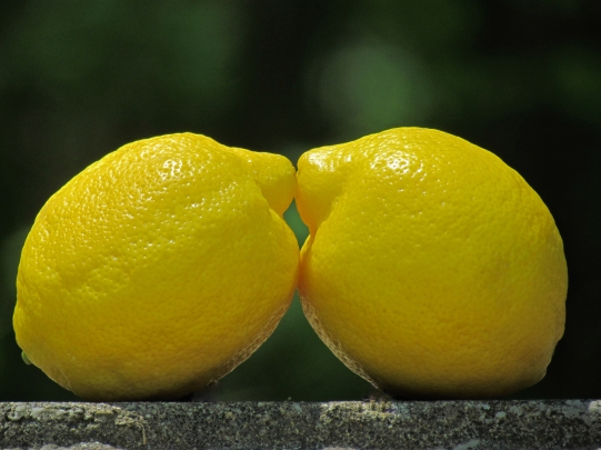 Lemon Lovers
