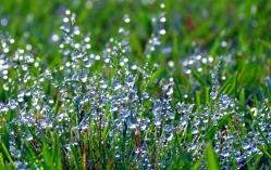 Early Morning Dew