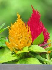Tree-like Flowers