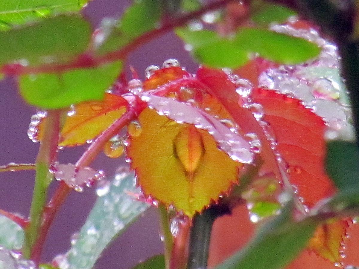 Hidden Droplet