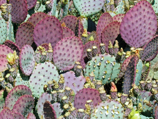 Green and Purple Cactus