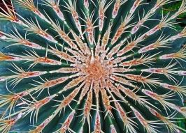 Cactus Burst