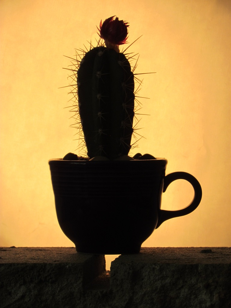 silhouette of a cactus in a cup