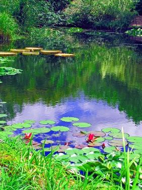 Lily pond at the Botantical Gardens in Wichita, KS.