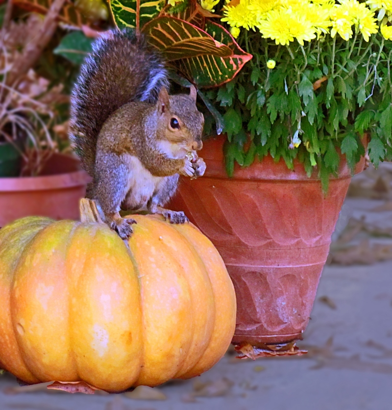Fall nature photography with a pumpkin and a squirrel.
