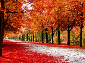 Fall in Germany