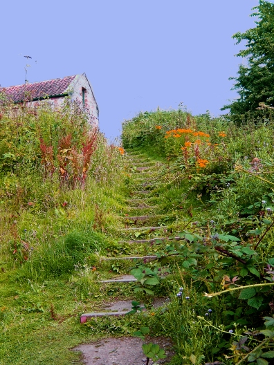Stone stairs in Scotland countryside.