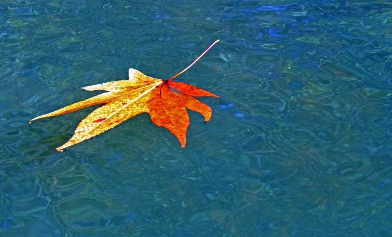 Floating fall leaf