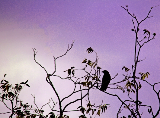 A crow on a branch.