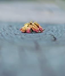 Weekly Photo Challenge: Minimalist