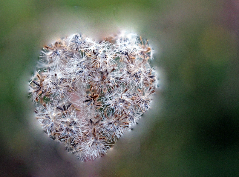 Heart shaped flower