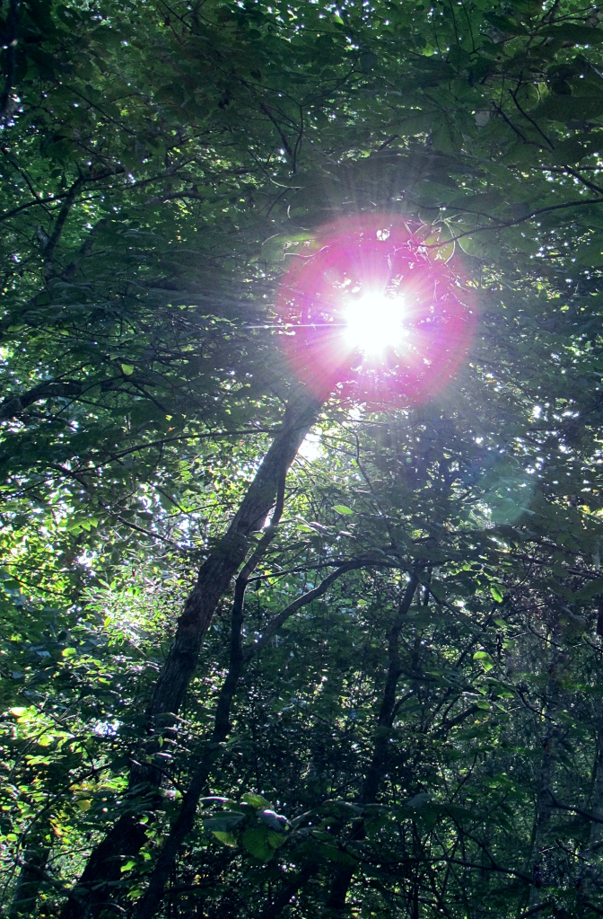 Sunlight bursting through the trees in the woods.