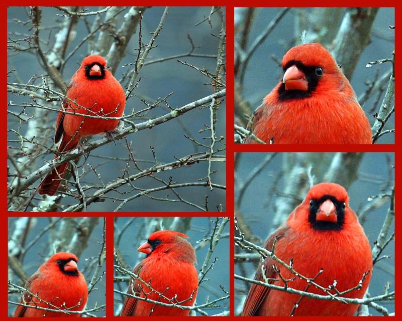 Make cardinal