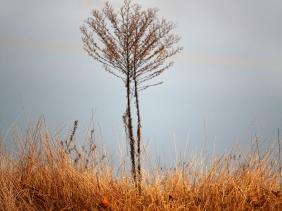 Same bare tree standing alone.