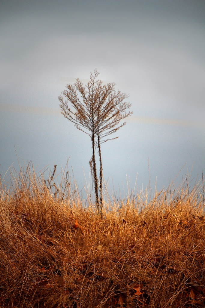 Small bare tree standing alone.