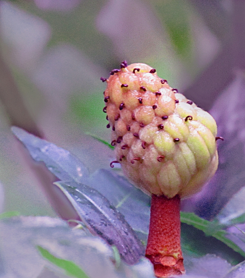 Floral Photography of a flower bud.