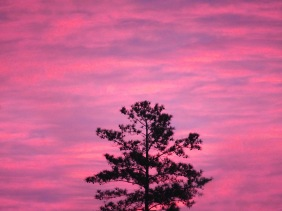 Lone tree at sunrise.