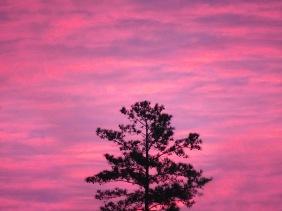 Lone tree at sunrise.