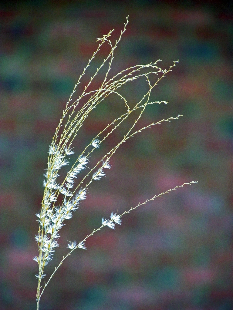 Macro Nature Photography of Ornamental Grass