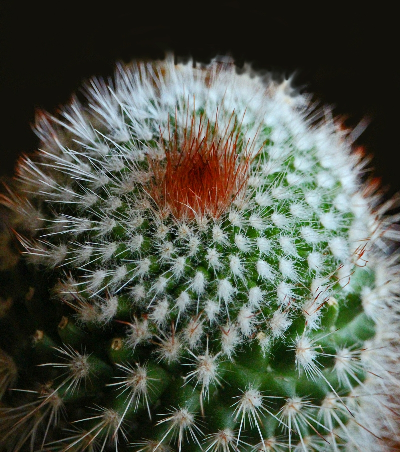Macro nature photography of a cactus