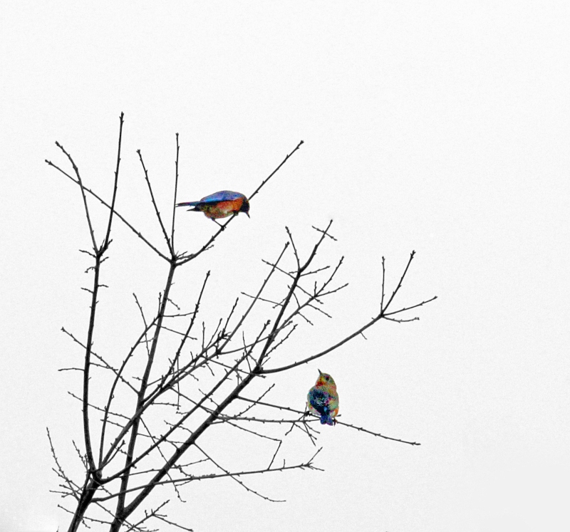 Two birds in a tree.