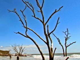 Seascape driftwood