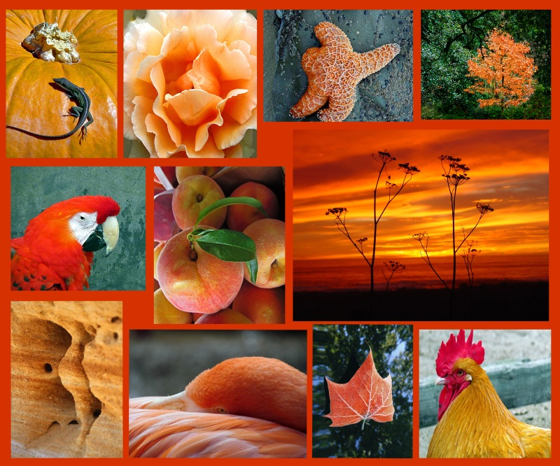 Weekly Photo Challenge:  Orange