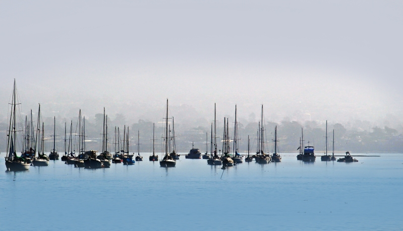 Sailboats in foggy Morro Bay, California.