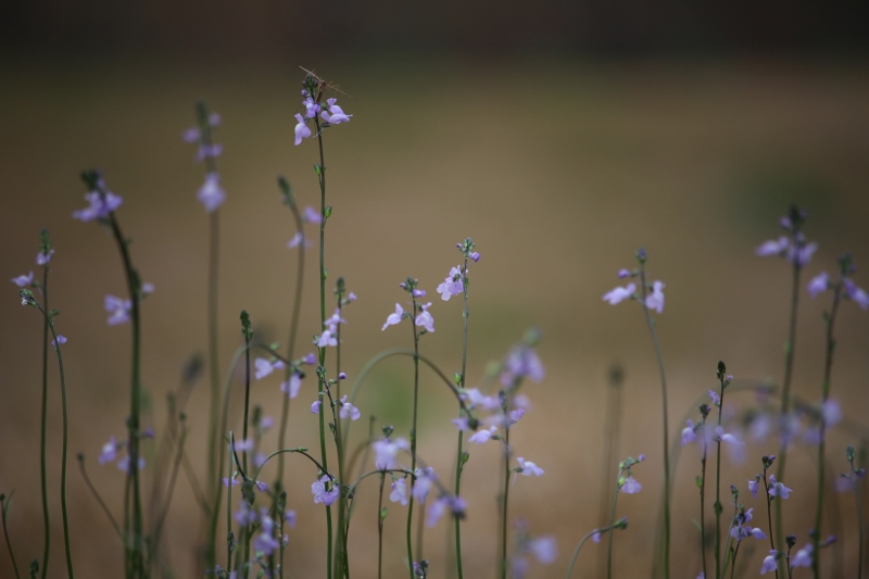 Macro nature photography of tiny purple wild flowers.