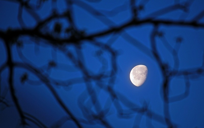 Moon through the branches.