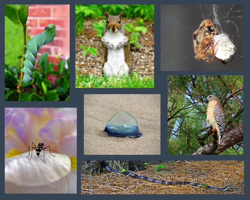 Weekly Photo Challenge:  Force of Nature