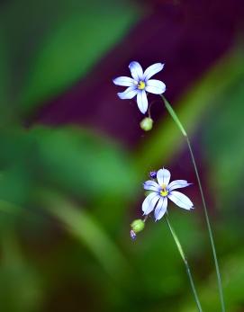 Macro nature photography of tiny flowers