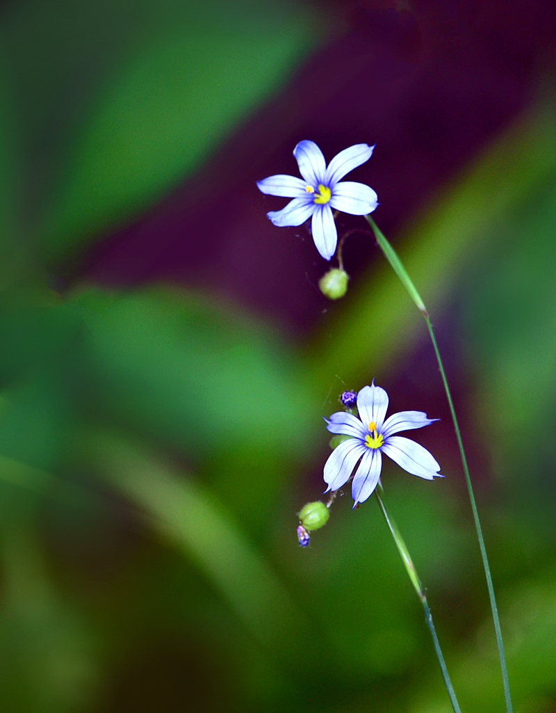 Macro nature photography of tiny flowers