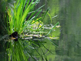 Pond reflection from Magnolia Plantation in SC