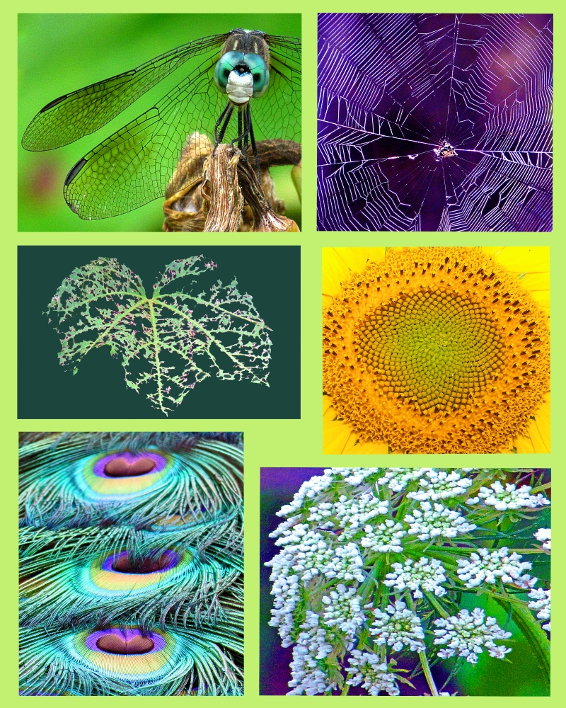 Weekly Photo Challenge:  Intricate