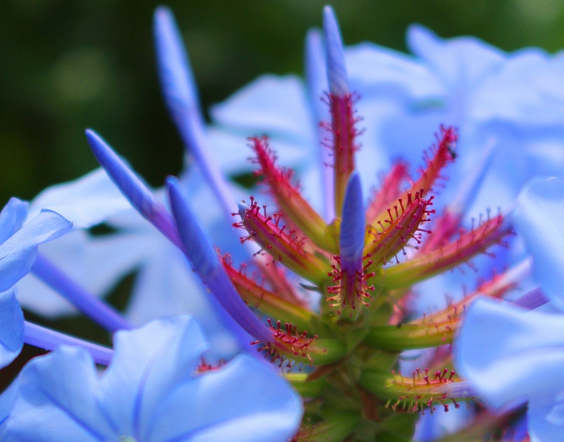 Macro nature floral photography
