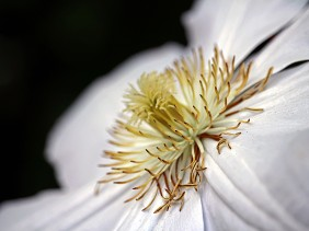 Macro nature photography of a white flower