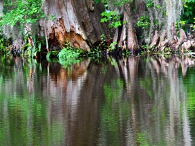 Nature Photography of reflections in a pond.