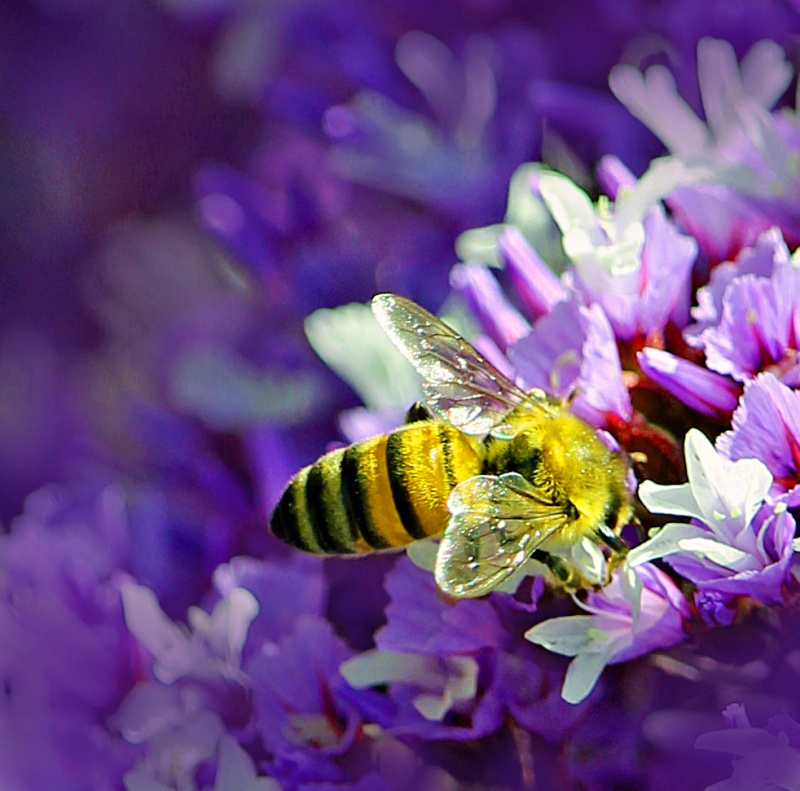 Macro nature photography of a bee and flower.