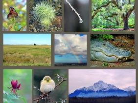 Weekly Photo Challenge: Inspiration