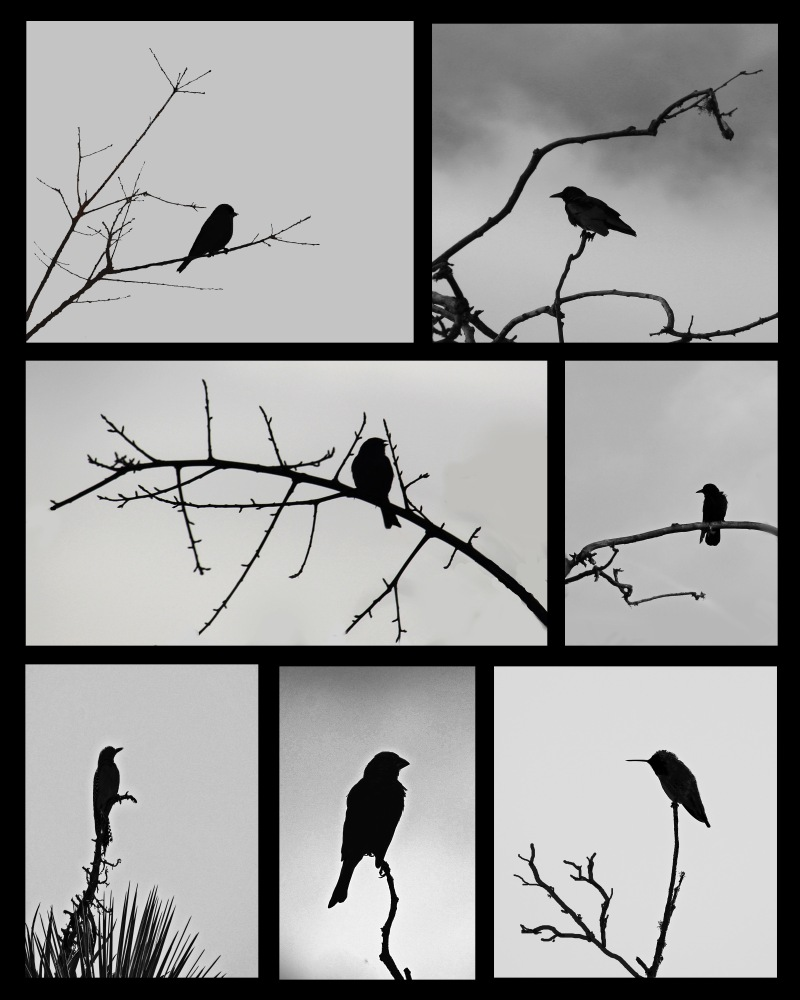 Gallery of silhouettes of lone birds.