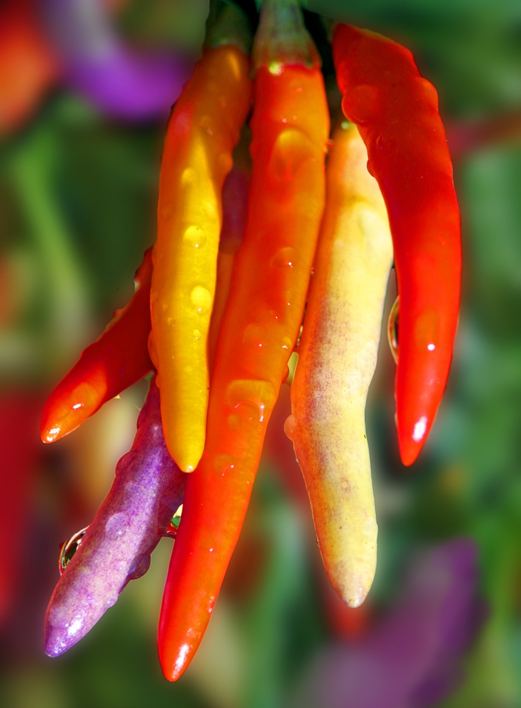 Nature photography of colorful peppers
