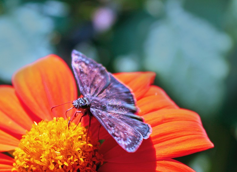 Nature photography of a butterfly on a flower.