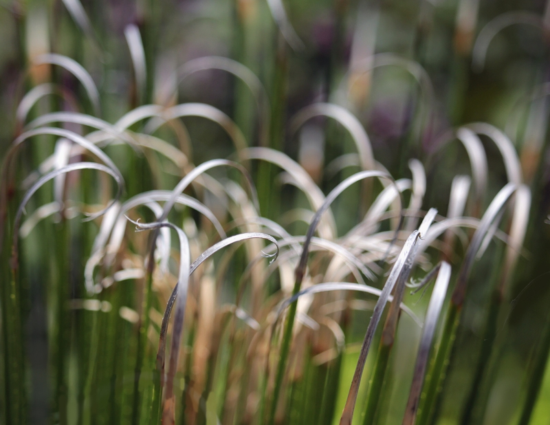 Nature photography of  grass textures.