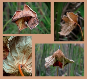 A collage of fading leaves.